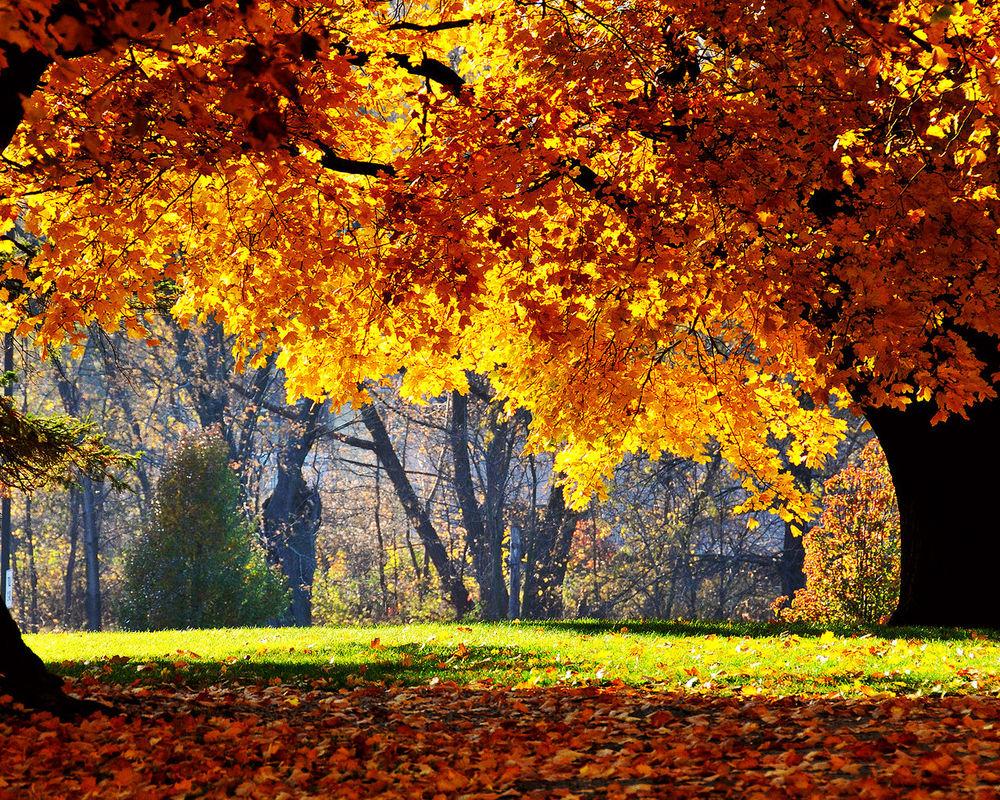 Красивый фон на рабочий стол осень на весь экран (23)