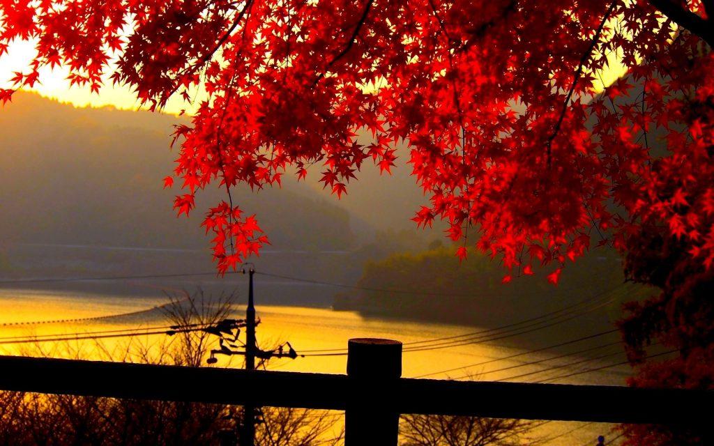 Красивый фон на рабочий стол осень на весь экран (24)