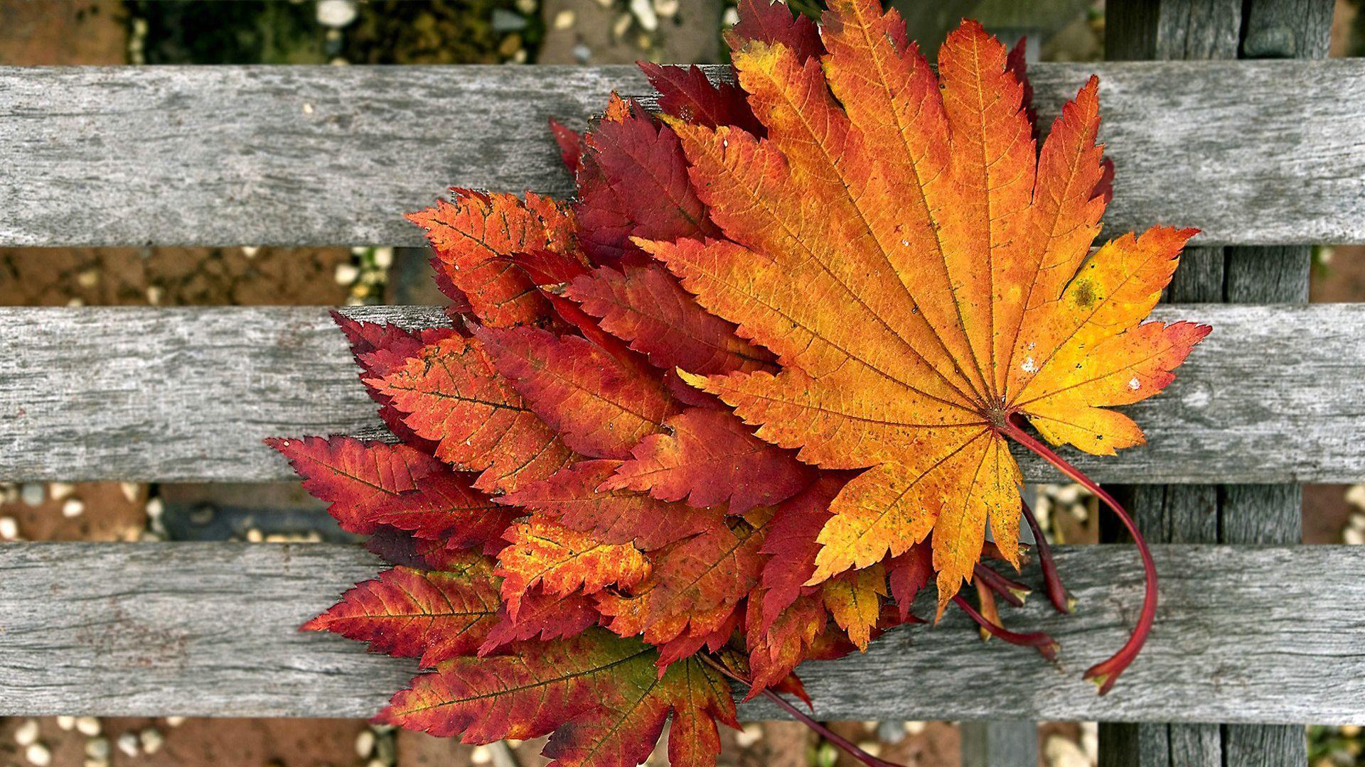 Красивый фон на рабочий стол осень на весь экран (4)