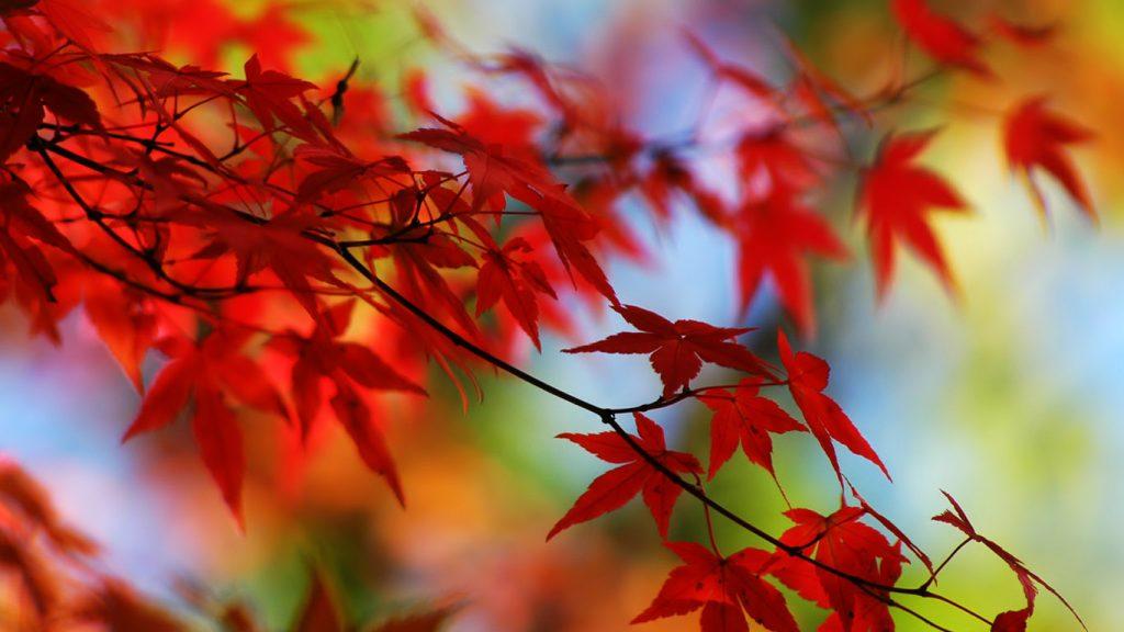 Красивый фон на рабочий стол осень на весь экран (8)