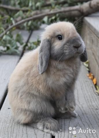 Кролики красивые картинки и фото (1)