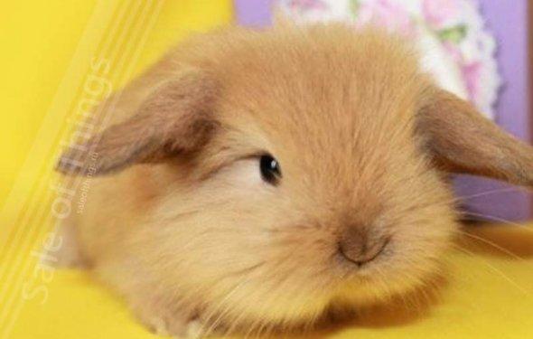 Кролики красивые картинки и фото (10)