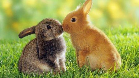 Кролики красивые картинки и фото (11)