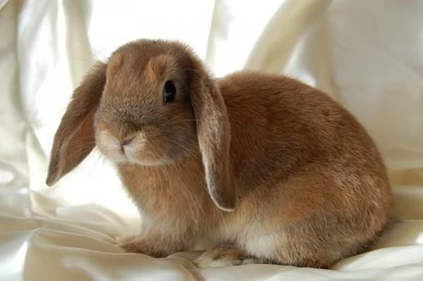 Кролики красивые картинки и фото (12)
