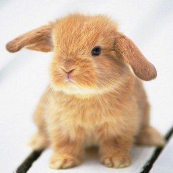 Кролики красивые картинки и фото (13)