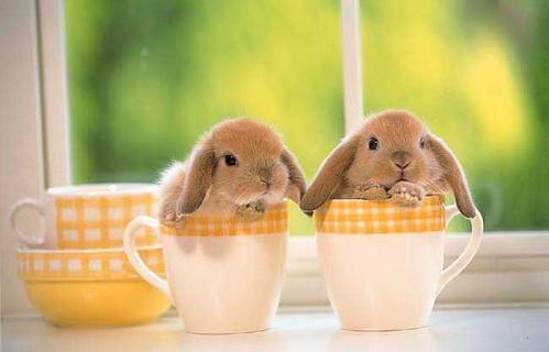 Кролики красивые картинки и фото (14)