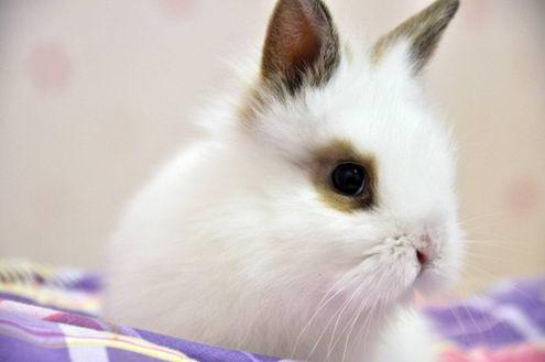 Кролики красивые картинки и фото (15)