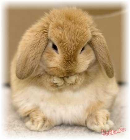 Кролики красивые картинки и фото (16)
