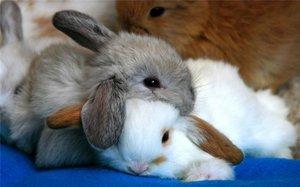 Кролики красивые картинки и фото (17)