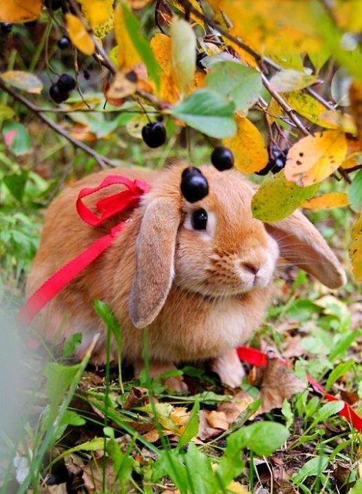 Кролики красивые картинки и фото (18)