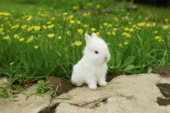 Кролики красивые картинки и фото (19)