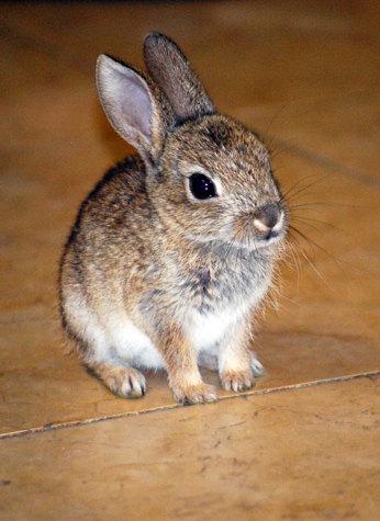 Кролики красивые картинки и фото (2)
