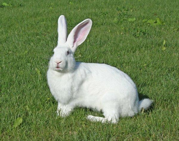 Кролики красивые картинки и фото (20)