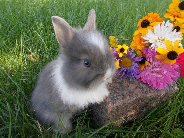 Кролики красивые картинки и фото (21)