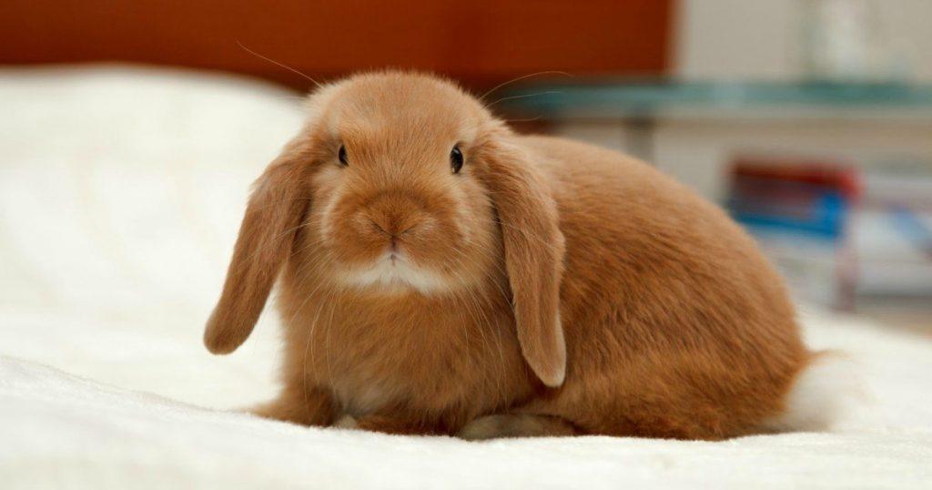 Кролики красивые картинки и фото (22)