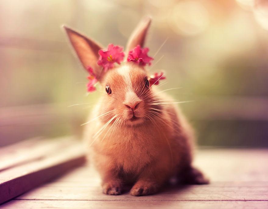 Кролики красивые картинки и фото (23)