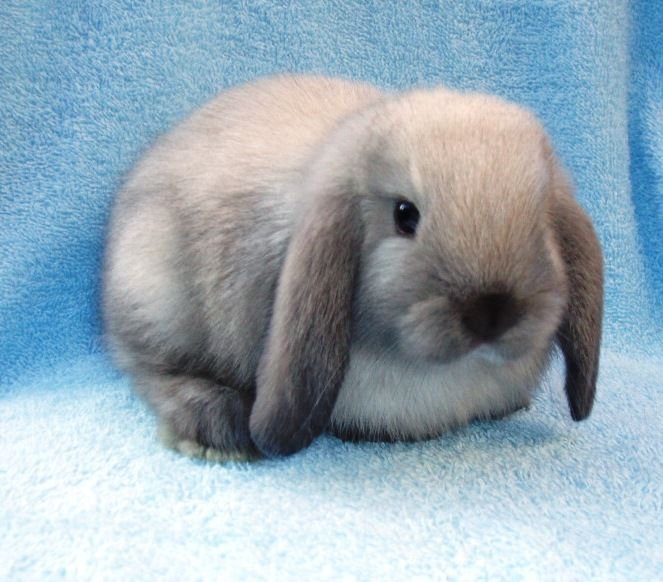 Кролики красивые картинки и фото (24)