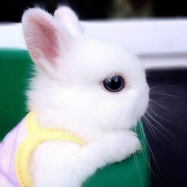 Кролики красивые картинки и фото (25)