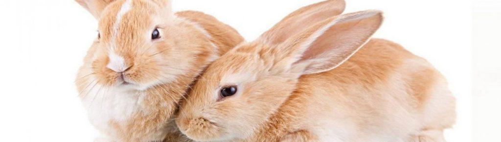 Кролики красивые картинки и фото (26)