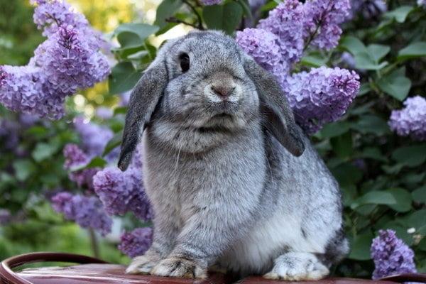 Кролики красивые картинки и фото (27)
