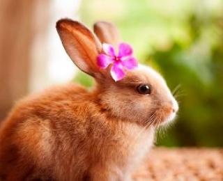 Кролики красивые картинки и фото (28)