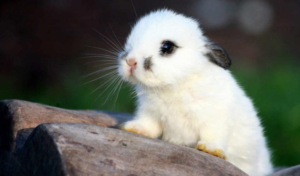 Кролики красивые картинки и фото (29)