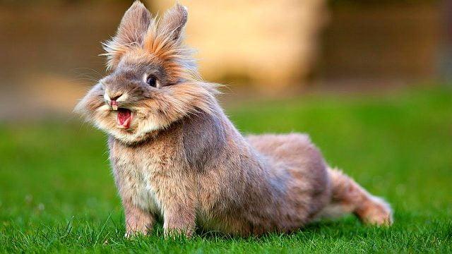 Кролики красивые картинки и фото (3)