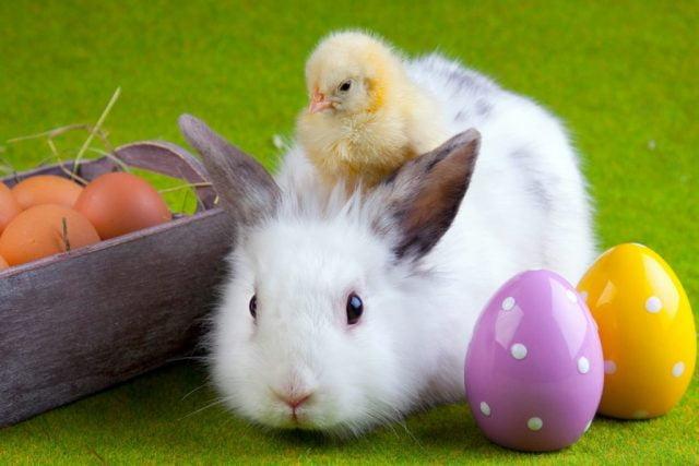 Кролики красивые картинки и фото (4)