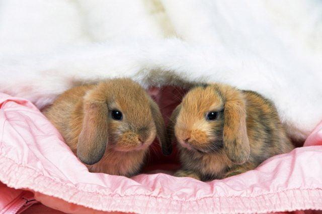 Кролики красивые картинки и фото (5)