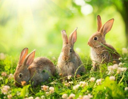 Кролики красивые картинки и фото (6)