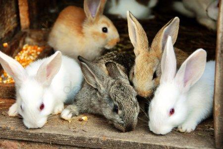 Кролики красивые картинки и фото (7)