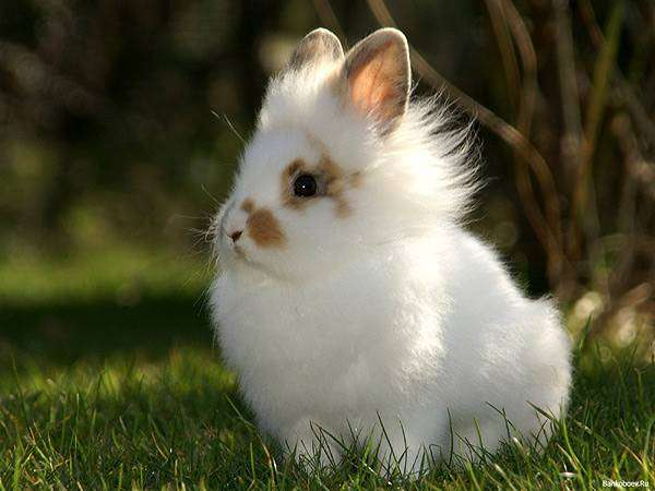 Кролики красивые картинки и фото (8)