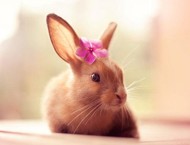Кролики красивые картинки и фото (9)