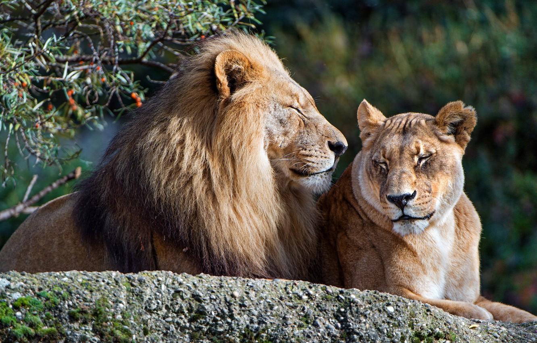 Красивые картинки семья животные