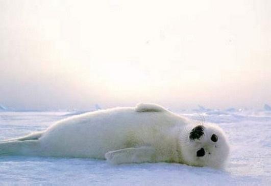 Мне все лень я тюлень прикольные фото001