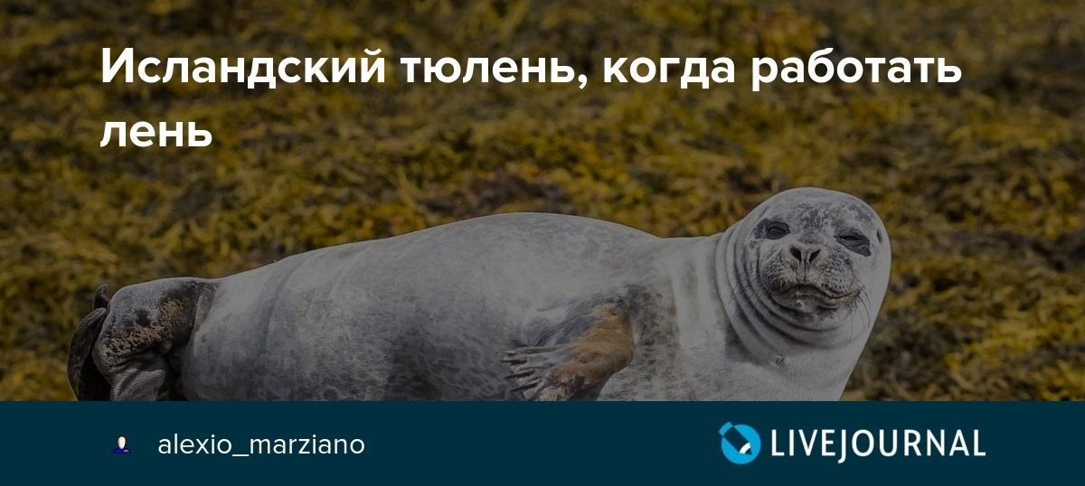 Мне все лень я тюлень прикольные фото002