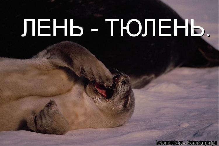 Мне все лень я тюлень прикольные фото003