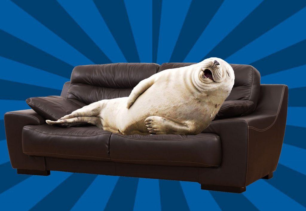 Картинки смешные на диване