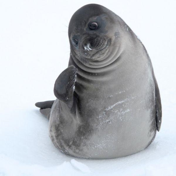 Мне все лень я тюлень прикольные фото009