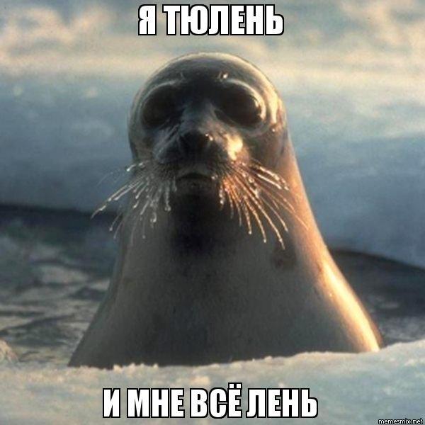 Мне все лень я тюлень прикольные фото011