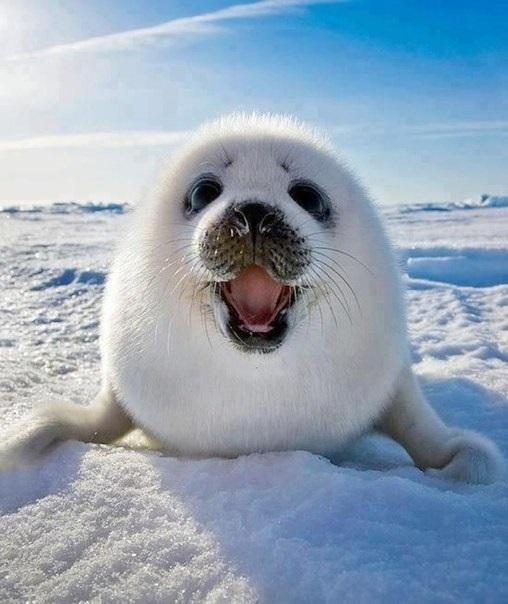 Мне все лень я тюлень прикольные фото014