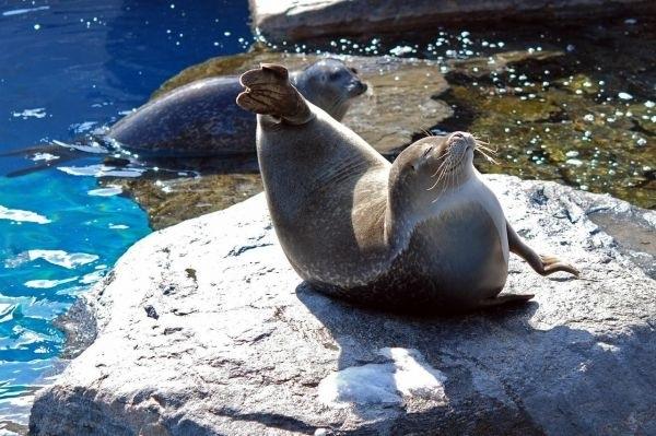 Мне все лень я тюлень прикольные фото015