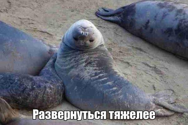 Мне все лень я тюлень прикольные фото020