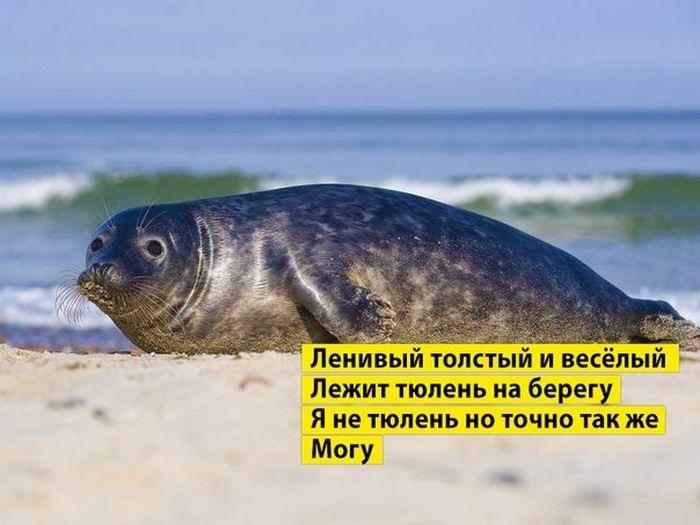 Мне все лень я тюлень прикольные фото021