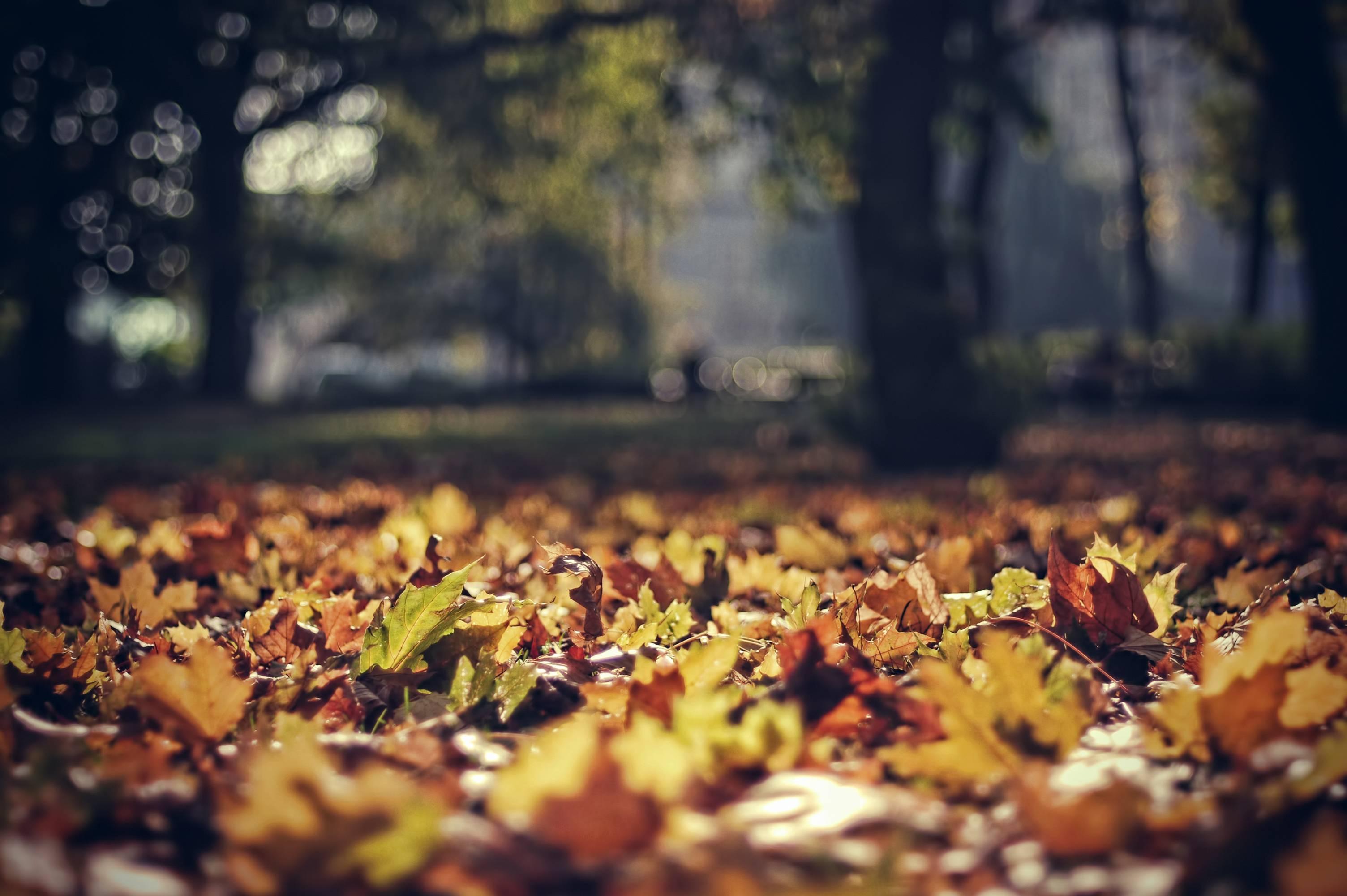 Октябрь картинки на рабочий очень красивые (11)