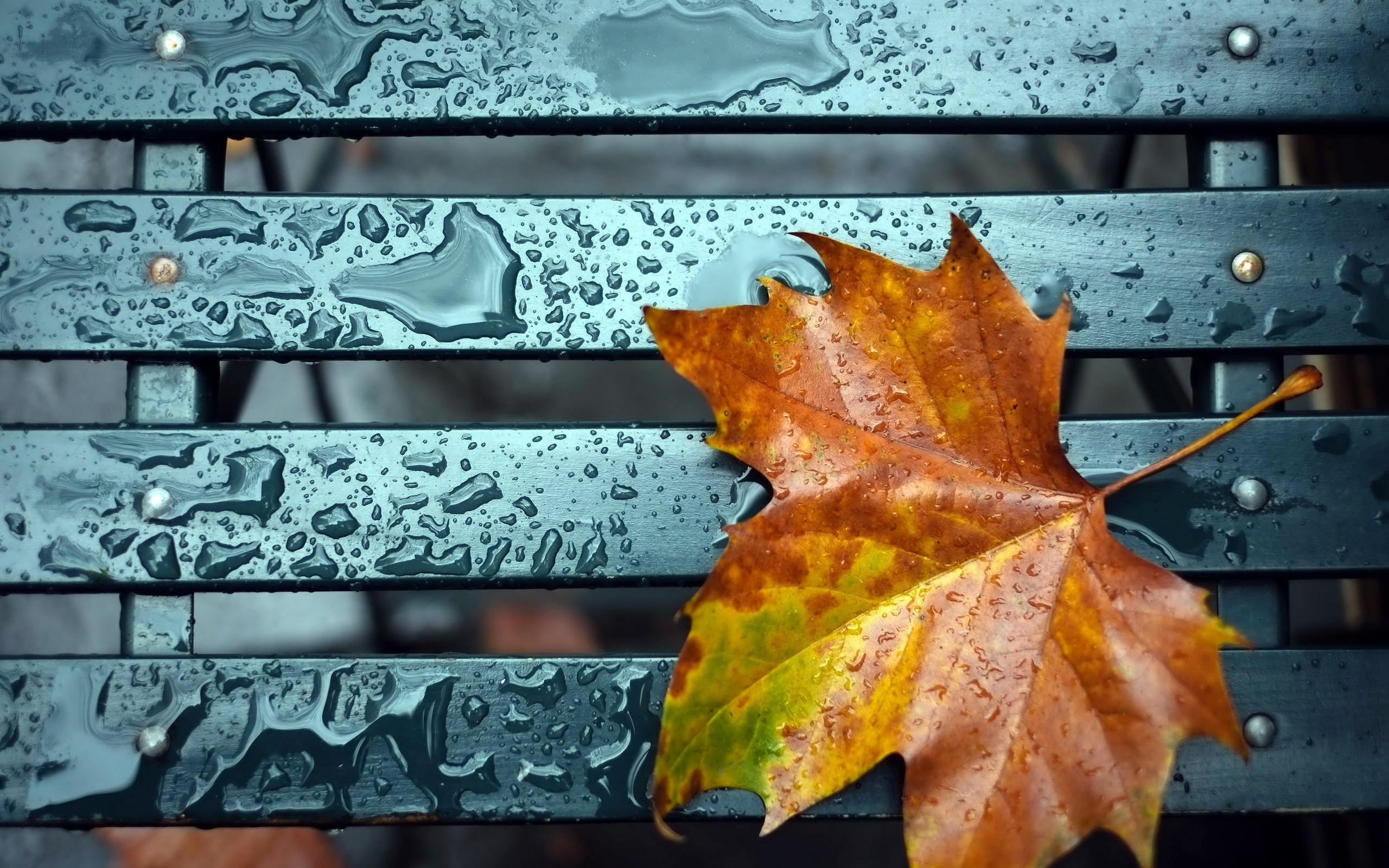 Октябрь картинки на рабочий очень красивые (6)