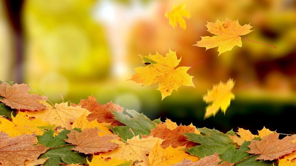 Октябрь картинки на рабочий очень красивые (8)