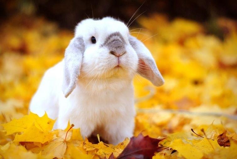 Осеннее воскресенье картинки и фото016