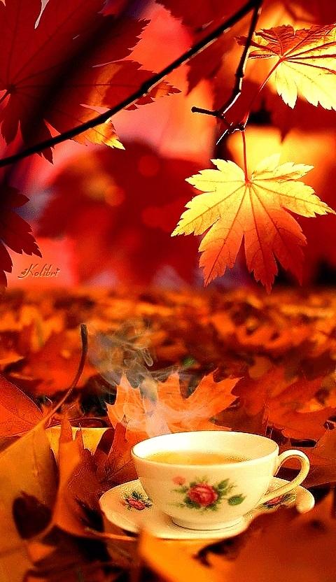 Осенние листья и кофе картинки красивые и милые019