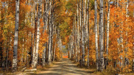 Осенний лес с грибами картинки для детей (1)